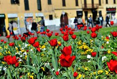 primavera basilica san't eustorgio