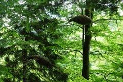 ptaki-lesne-1