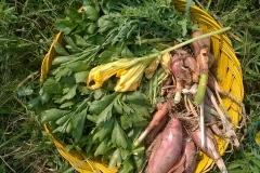 raccolto orto bio