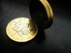 Maple-Leaf-Goldmünzen (Foto: Goldreporter)