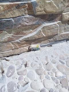 plaga termitas aladas cuevas ondas Málaga