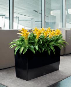 Modern Office Plants