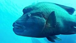 Polynésie française poisson
