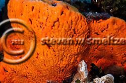 Orange Canyon Grand Cayman (stevenwsmeltzer.com)