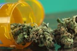 Steuereinnahmen: 13 Millionen durch Medizinalcannabis