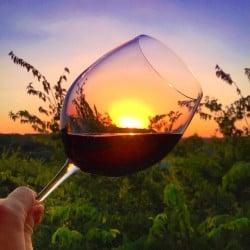 How to taste wine like a sommelier | taste wine like a pro