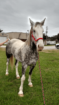 This is the newest addition to the Mobile Police Department's Mounted Patrol, but he still needs a name.