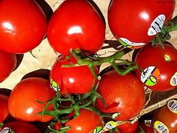 Organic tomatoes from U.S.