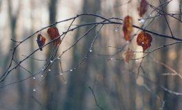 Օդի ջերմաստիճանը կնվազի 7-8 աստիճանով. եղանակը Հայաստանում ու Արցախում