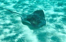 Cozumel, Mexico - Stingray