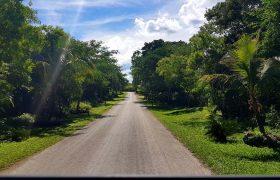 Cozumel, Mexico - Green Djungle
