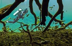 Cenote Aktun Ha (Car Wash), Yucatan Peninsula, Mexico