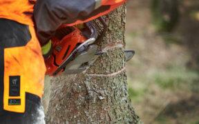 Wer einen Baum fällen lassen will, sollte einen professionellen Fachbetrieb engagieren.
