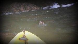 seal-kayak