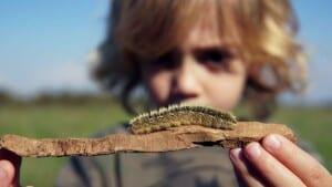 Ein Kind mit blonden Haaren hält ein Holzstück in die Kamera. Auf dem Holzstück krabbelt eine Raupe.