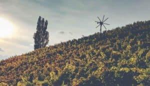 bunter Weingarten mit Klapotetz