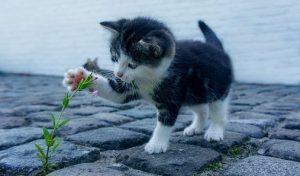 cica rózsás füzikével
