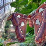 дом бабочек бурггартен вена