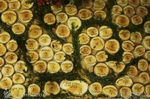 Lisie wesele Agaty i Kuby