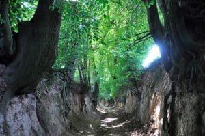 Kazimierski Park Krajobrazowy