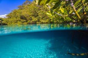 Types of Cenotes - Ancient lagoon-like Cenote