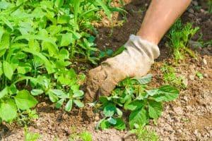 4 Safe Ways To Prevent Weeds Multiplying In Your Garden
