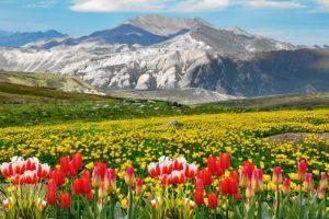voyage aux pays des tulipes