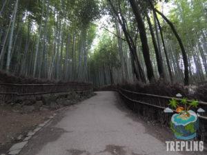 bamboo groves arashiyama