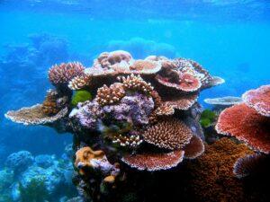 Koraler