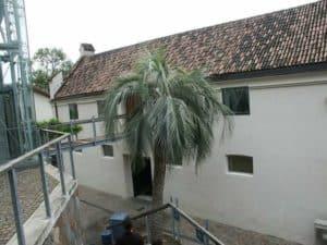 Winterharte Exoten - Palmen und weitere Pflanzen