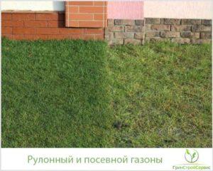 Рулонный и посевной газон - что выбрать?