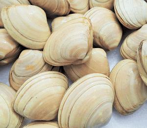 Entre nuestros moluscos la almeja blanca es muy valorada y económica