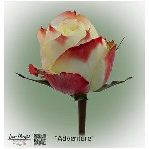 Ecuador Rose Adventure