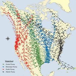 north america bird migratory map