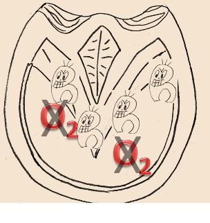 Strahlfäule - anaerobe Bakterien