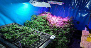 Marihuana Plantage in Wolfratshausen