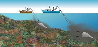 La red de arrastre causa impactos mínimos sobre el fondo marino