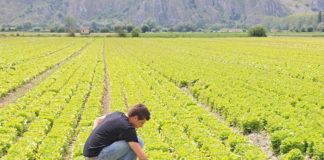 coldiretti lavoro in agricoltura online
