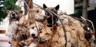 cina vieta consumo cani e gatti
