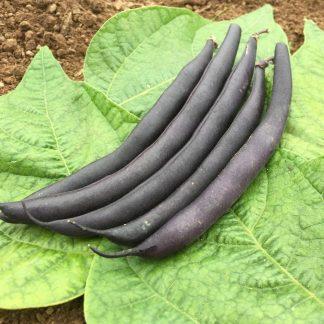 Dwarf French bean seeds