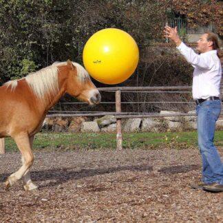 Аксессуары для работы с лошадью