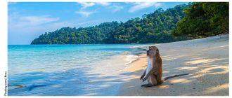 Остров Ко Чанг, Тайланд