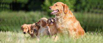 До какого возраста растут собаки разных пород
