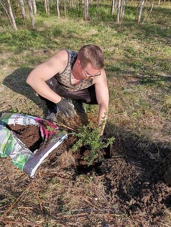 puiden istutus saaren taika vastuullinen yritys