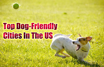 Photo of Top Dog-Friendly Cities in the US