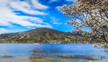 blauer Himmel am Tegernsee mit bluehendem Baum