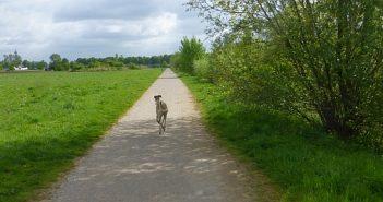 Hundefreiheit: Rheinpark Neuss