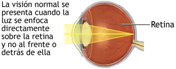 vision normal retina