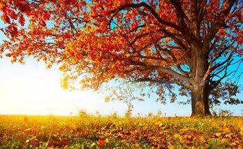 ayurvedic eating fall