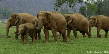 The elephant nature park in thailand is more than a zoo